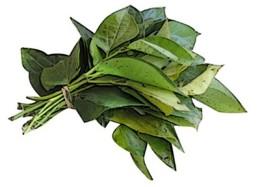 Ramuan Tradisional daun sirih untuk menghentikan kehamilan.
