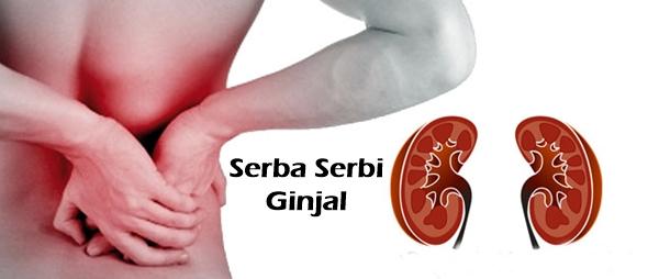 serba serbi organ ginjal manusia