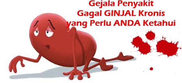 Image result for ginjal