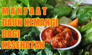 Manfaat daun kemangi bagi kesehatan