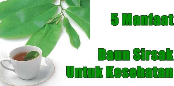 Manfaat daun sirsak untuk kesehatan
