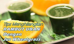Menghilangkan rambut uban dengan wheatgrass