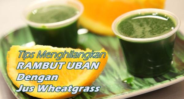Menghilangkan uban dengan wheatgrass