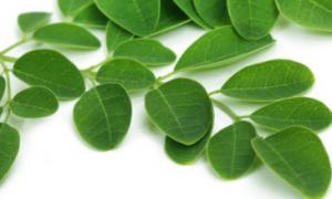 Obat tradisional daun kelor mengatasi diabetes