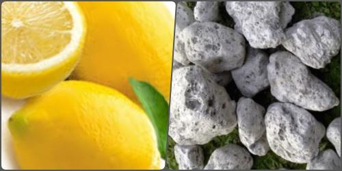 Lemon dan batu apung dapat memutihkan lutut dan siku